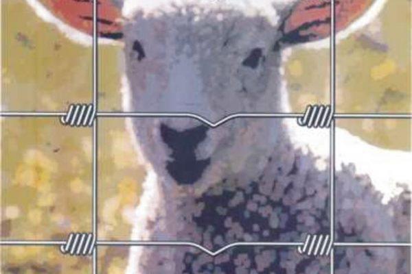 Knotengeflecht-Schaf-draht-haecker